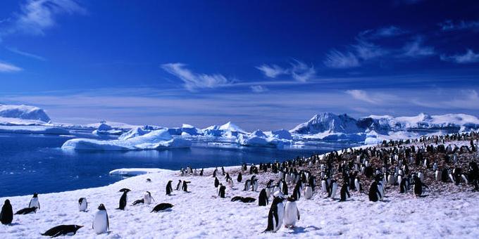 свадьба в Антарктиде фото
