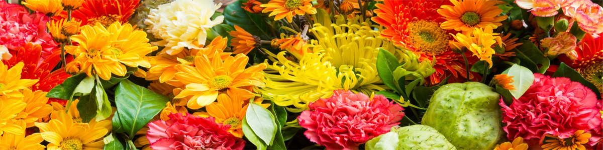 бабушка разводит цветы фото
